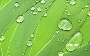 Toshiba natural green wallpaper