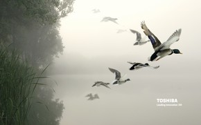 Toshiba birds in the air wallpaper