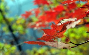 Beautiful Leaf Autumn wallpaper