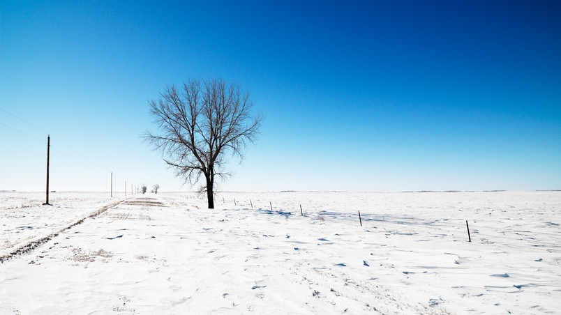 Lonely Tree on Winter wallpaper