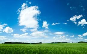 Summer beautiful landscape