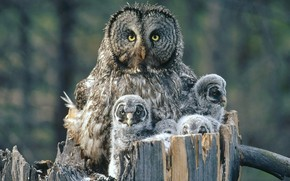 Owl Family Background wallpaper