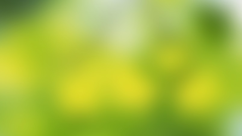 Soft Green Hd Wallpaper Wallpaperfx