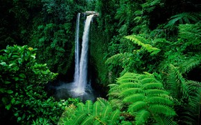 Waterfall in Forest Background