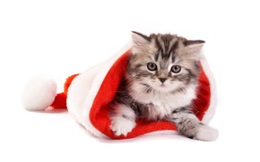 Fluffy cat in Santa hat wallpaper
