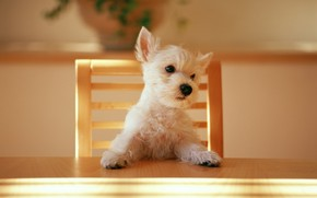 Dog at the table