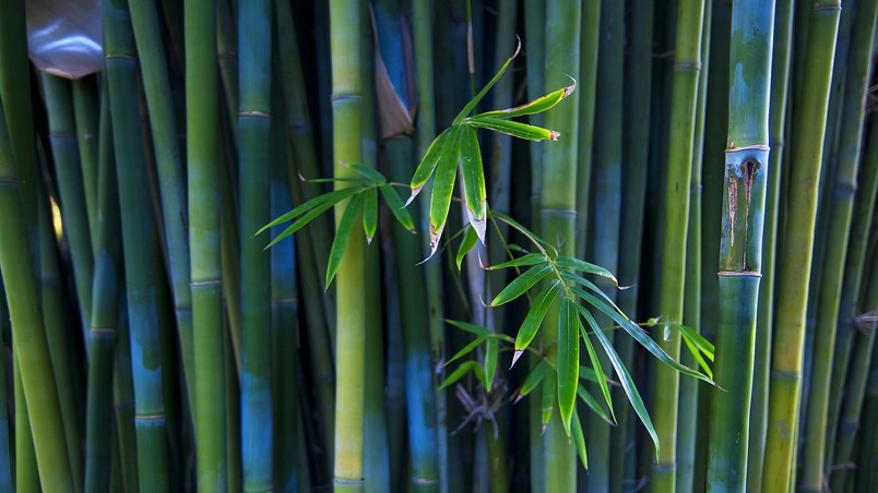 Nice Bamboo Plant wallpaper
