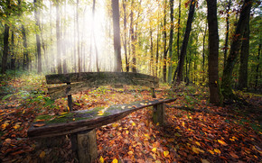Beautiful Autumn Forest View wallpaper