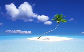 A Palm Tree Island