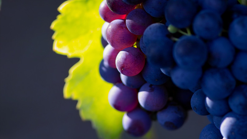 Bunch of Grapes wallpaper