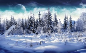 Trees full of snow wallpaper