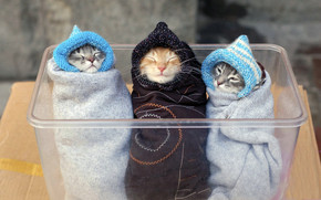 Three Kitten wallpaper