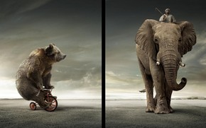Bear Vs Elephant wallpaper