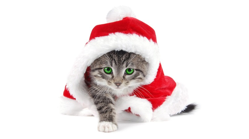 Cat Santa wallpaper