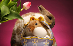 Easter Bunnies wallpaper