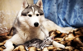 Dog and Cat Friends wallpaper