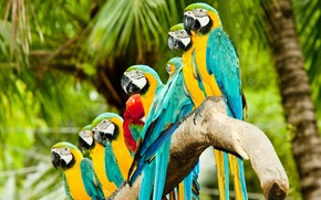 Colourful Parrots wallpaper