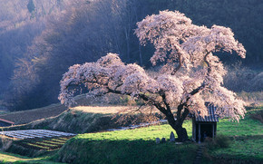 Beautiful blossoming tree