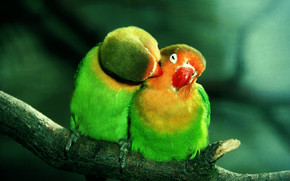 Parrots in Love wallpaper