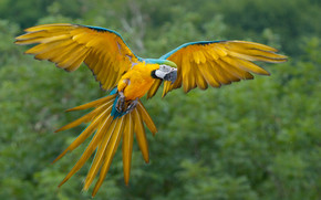 Parrot Flying wallpaper