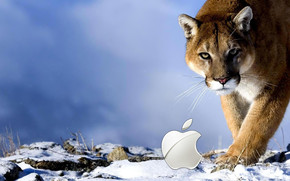 Apple Wild wallpaper
