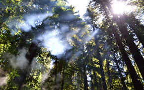 Breaking through the Trees