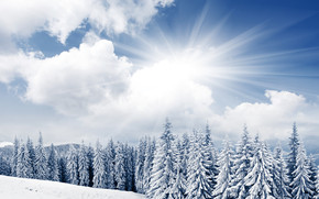 Bright Winter Day wallpaper