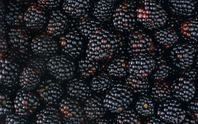 Tasty Blackberries wallpaper