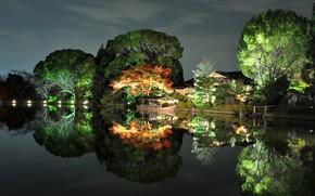 Lovely Night Park Lightning