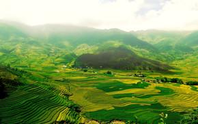 The green fields