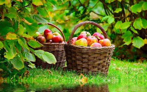 Apples Basket wallpaper