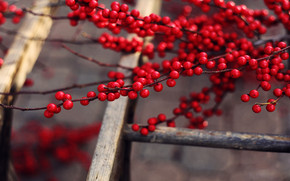 Red Berries Branches wallpaper