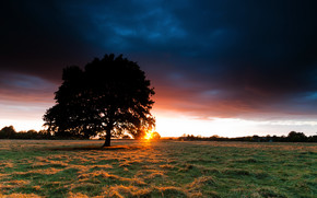 Sunset Behind the Tree