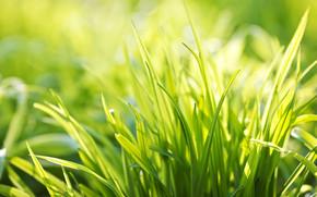 Ever Green Grass