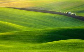 Spectacular Green Field wallpaper