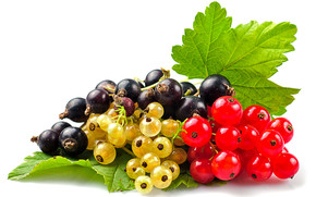 Currants Selection wallpaper