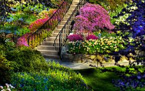 Amazing Garden