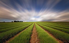 Straight Field Green Lines