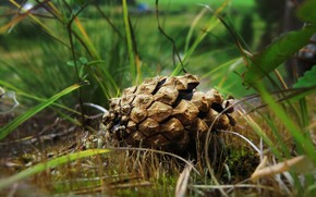 Beautiful Spruce Cone wallpaper