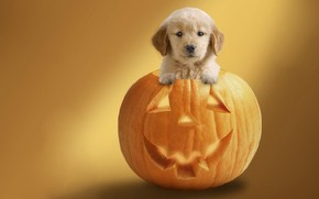 Dog Ready For Halloween wallpaper