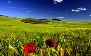 Stunning Green Landscape wallpaper
