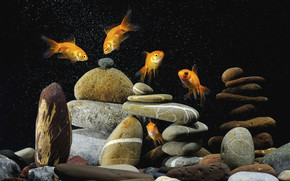 Gold Fishes Life wallpaper
