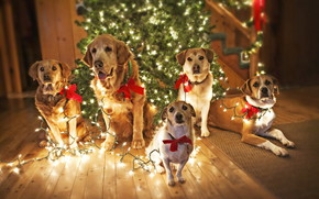 Dogs Waiting for Santa wallpaper