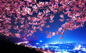 Lovely Cherry Blossom wallpaper