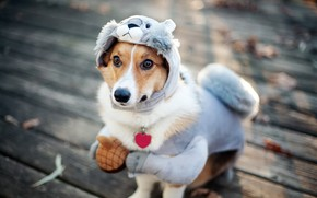 Funny Dog Dressup wallpaper