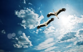 Birds Flying wallpaper