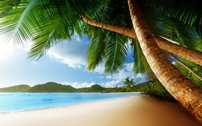 Exotic Palm Island