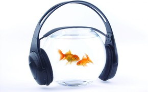 Music for Fishes wallpaper
