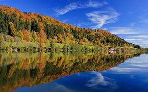 Bavaria Forest Landscape