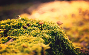 Beautiful Close Up Moss wallpaper